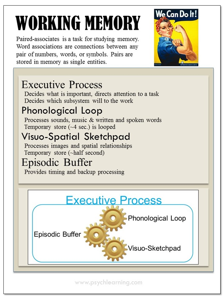 Inforgraphic about Working Memory